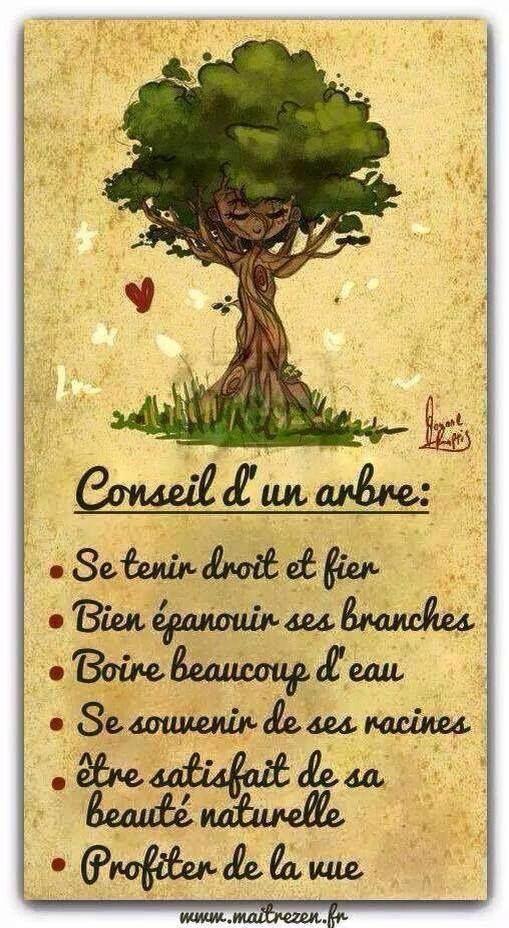 Citation et vous quel arbre tes vous leading inspiration culture - Quel dormeur etes vous ...