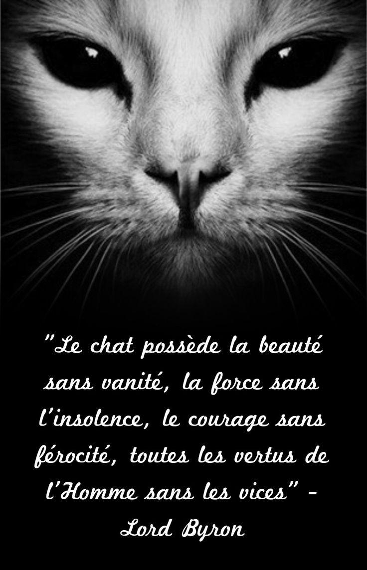 citation le chat poss de la beaut sans vanit la force sans l 39 insolence l listspirit. Black Bedroom Furniture Sets. Home Design Ideas