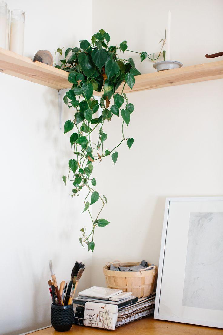 d coration nature la plante peut venir habiller un angle de pi ce un peu nu listspirit. Black Bedroom Furniture Sets. Home Design Ideas