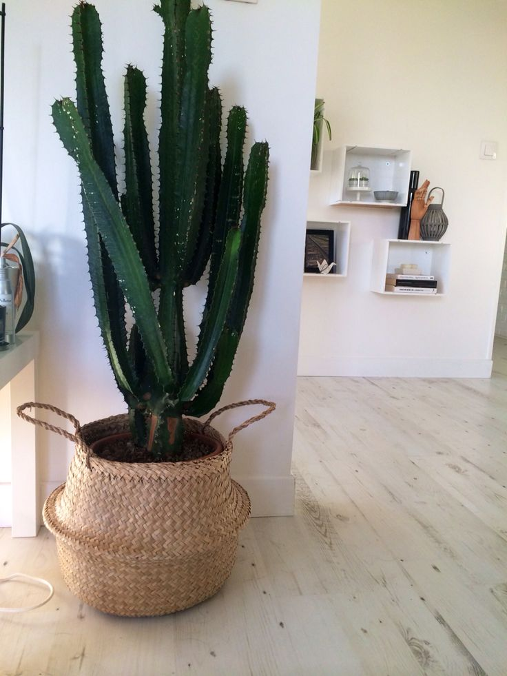 d co salon cactus avec cache pot panier bloomingville leading inspiration. Black Bedroom Furniture Sets. Home Design Ideas