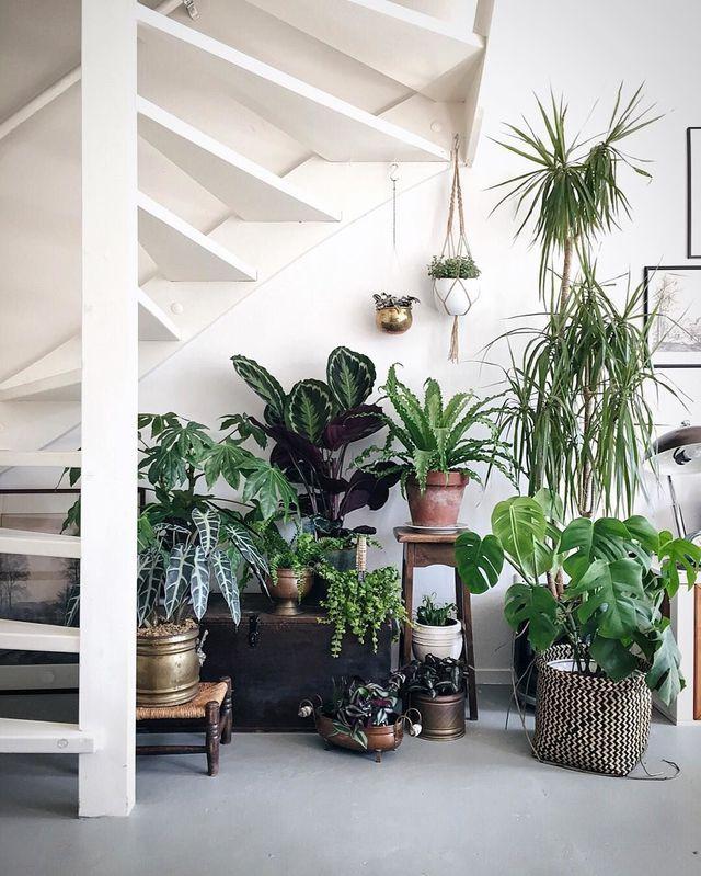 d coration nature foret tropical accumulation plantes am nager un dessous d 39 escalier. Black Bedroom Furniture Sets. Home Design Ideas