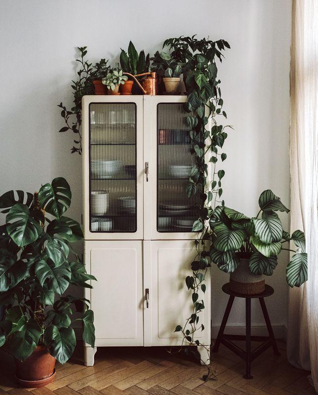 D coration nature meuble rangement vaisselle blanc parquet bois monstera plantes vertes pot de - Meuble plante ...