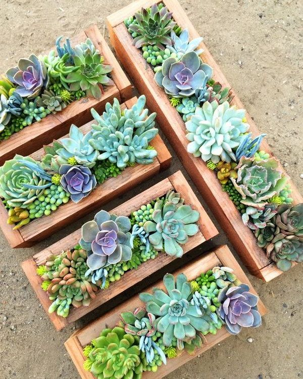 Diy Crafts Creative Indoor And Outdoor Succulent Garden