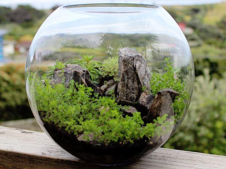 plante grasse ornementale