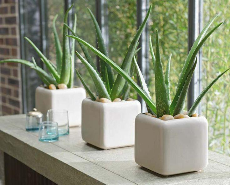 Description. 5 Plantes ...